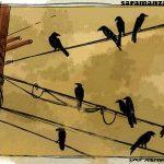 Cuervos en el tendido electrico