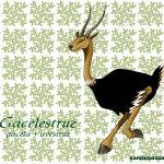 Gacelestruz